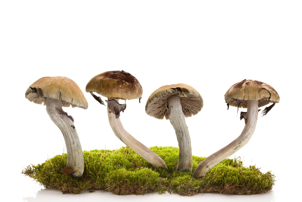 Magic Mushroom And Its Beneficial Uses